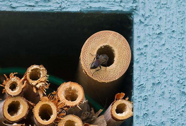insekthotell-25062016-f